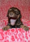 Twix 2 Yawning.JPG