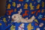 Cuddly_01 WEEK 8.jpg